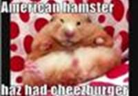 Hamster4everluv1