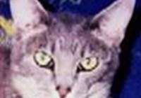 greykitteh avatar