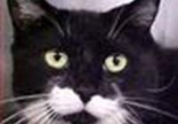 ali.cat