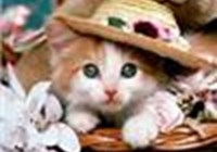 kittensruletheworld