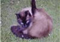 lolcatoncatnip