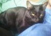 sootycat0809