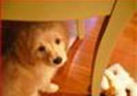 PuppySkye