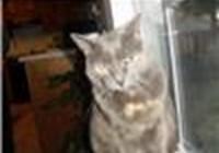KittyCaleb