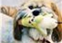 DoggeezMom