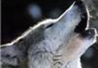Wolfyowl