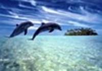 sydneyswimmer99