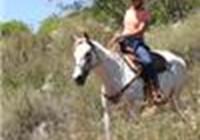 horse28