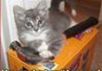 tabbycat1596