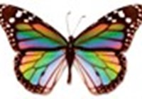 ButterflyCVX