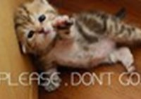 kittenlover2012