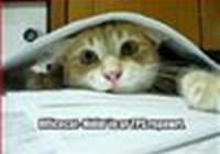 officecat