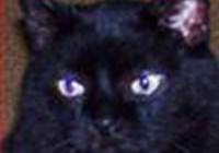 cookiedoughcat