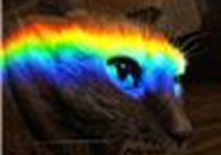 rainbowpuss