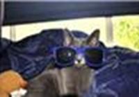 Lolzcats7890