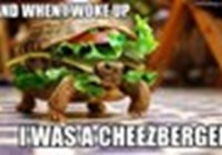 lotsofcheezburgers22