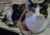 Kat.Whompas