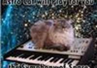 meowcat2