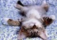 sapphire_kitty