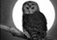 Owlspirit