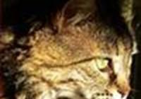 catcentrics
