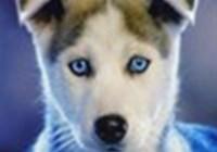 Master.Wolfie