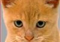 maestro-cat