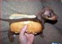 doggeh135
