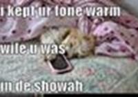 lawldatcat