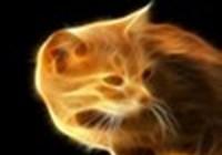 Fireproofcat