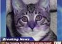 kittencat1235
