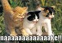 LunasLOLcat