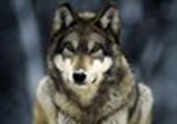 thewolf45