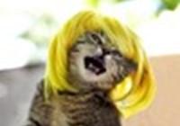 kittycatqueen