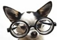 thepinkydog1205