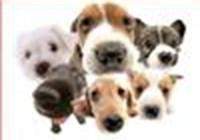 dogsrule11223