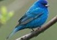 Razuli avatar