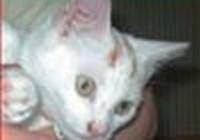 tillycat