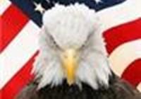 eagle800911