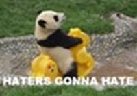PandaLover567