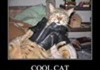 angusburgercat