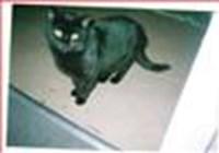 catlady2 avatar