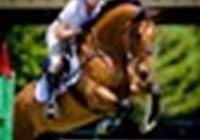horseloverrose