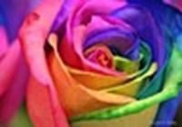 RainbowliousRose