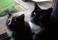cateycat888