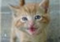 Cimbacat avatar