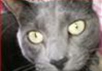 mcat avatar