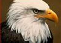 EaglesWing