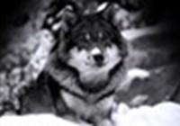 Darkwolf67