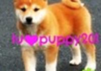 luvpuppy201